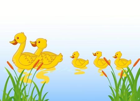 アヒル: 湖でアヒルの家族  イラスト・ベクター素材