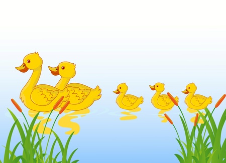 duckling: family of ducks on the lake