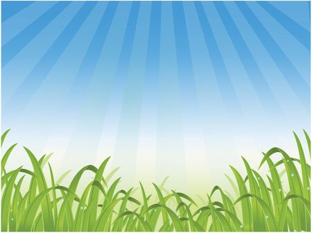 beauty grass background Vector