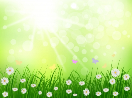 non    urban scene: beauty grass and daisy flower with sunny background