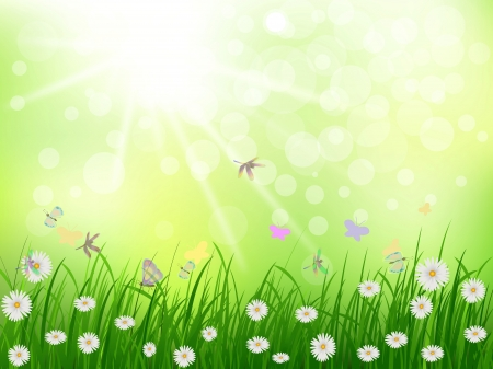 beauty grass and daisy flower with sunny background Vector