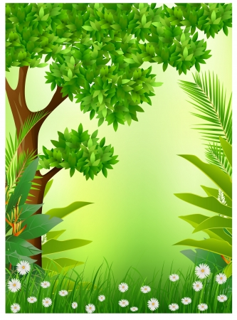 tree in field: tropical forest background