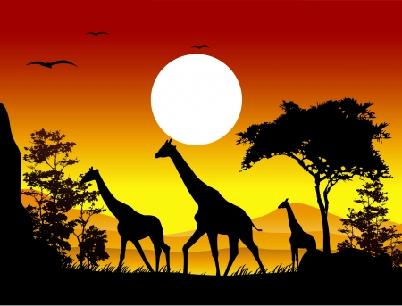 beauty giraffe trip silhouettes with landscape background Stock Vector - 15359904