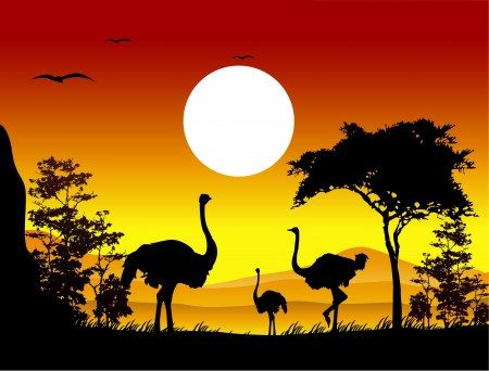 beauty ostrich silhouettes with landscape background Vector