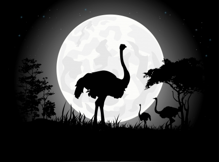 Beautiful Ostrich silhouettes with giant moon background Vector