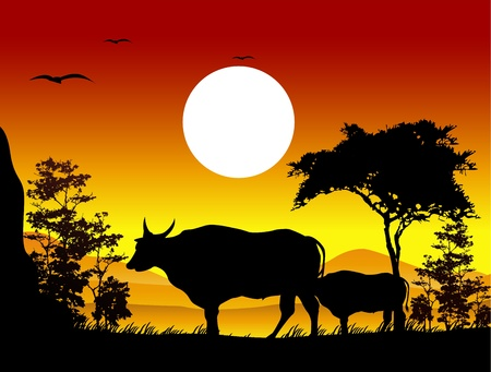 sunset lake: beauty cow silhouettes with landscape background