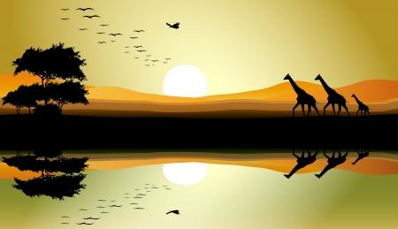 beauty safari of giraffe with landscape background