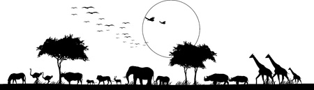 africa tree: beauty silhouette of safari animal wildlife Illustration