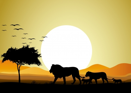 beauty lion family silhouette with sunset background
