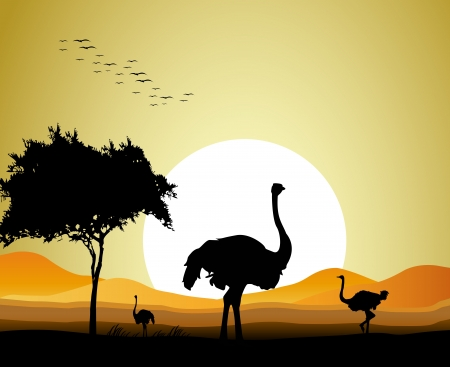 emu bird: beauty ostrich silhouette with sunset background Illustration