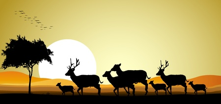 beauty deer family silhouette with sunset background Vector