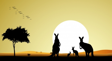 australia landscape: beauty kangaroo family silhouette with sunset background