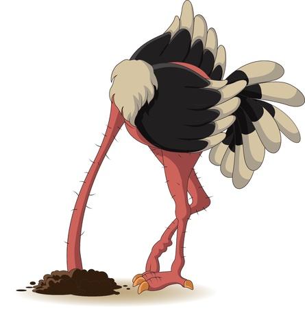 struisvogel heeft begraven een hoofd in het land