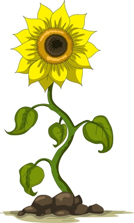 country side: sunflower