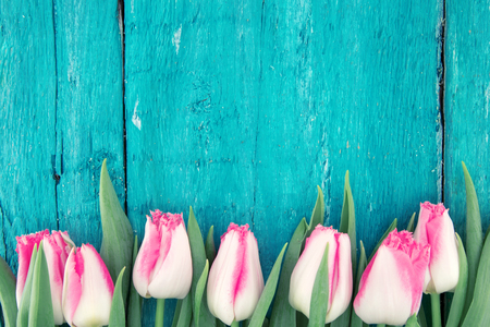 Frame of tulips on turquoise rustic wooden background. Spring flowers. Spring background. Greeting card for Valentines Day, Womans Day and Mothers Day. Top view Stock Photo