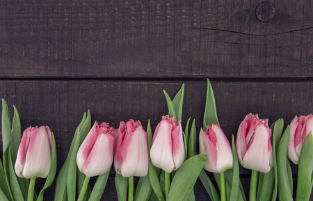 Frame of tulips on dark rustic wooden background with copy space for message. Spring flowers. Greeting card for Valentines Day, Womans Day and Mothers Day holidays. Top view.