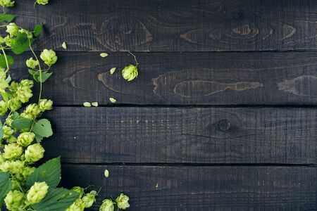 humulus: Border from green hop branches on dark rustic wooden background. Concept of beer production. Mock up for beer presentation. Brewing. Stock Photo