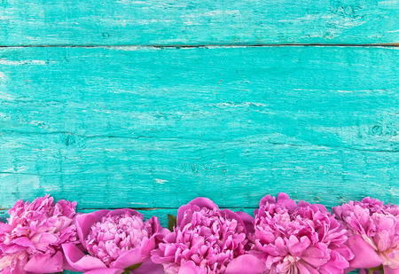 Frame of pink peony flowers on turquoise rustic wooden background with empty space for greeting message. Mothers Day and spring background concept. Holiday mock up. Top view.