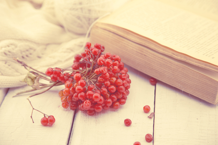Autumn Still Life with Rowanberry and old book on a white rustic wooden table. Vintage toned image