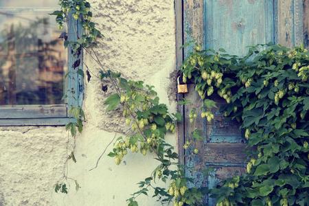 ホップの生い茂った古い廃屋。 写真素材