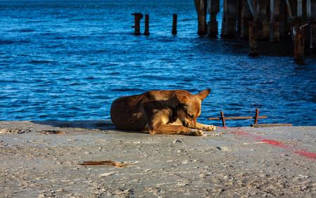 Stray dog at the sea shore