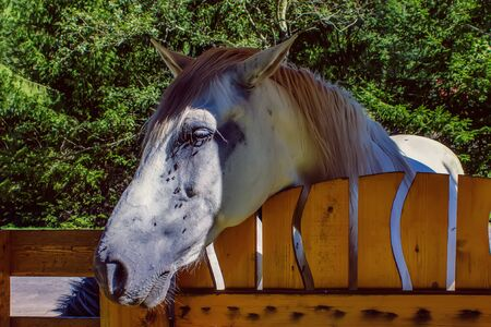 Sad horse standing at the wood fence and suffer from molestful flies. Close-up