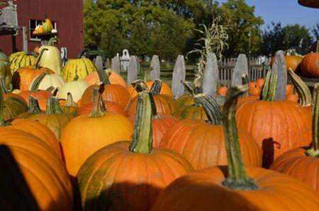 Pumpkins for sale on a rural Michigan farm photo
