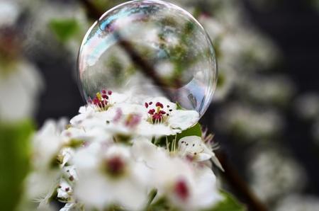 Pretty bubble on a white flower