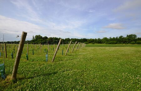 getting started: Young private vineyard getting started
