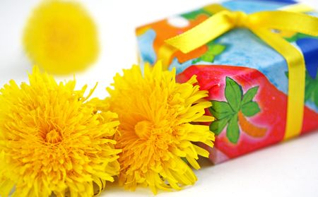 Box in celebratory packing. Dandelions. Taraxacum officinale. Over white