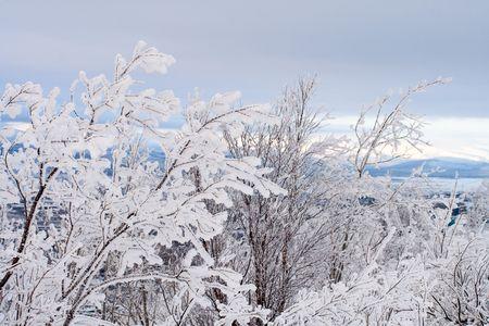 Winter landscape, trees under snow after snow-storm photo