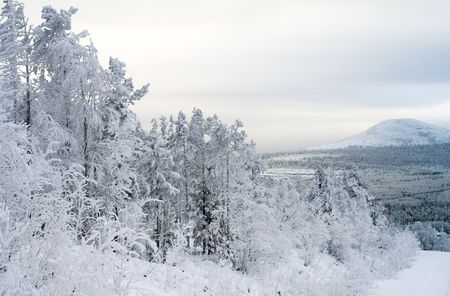 Winter landscape, trees under snow after snow-storm, mountains