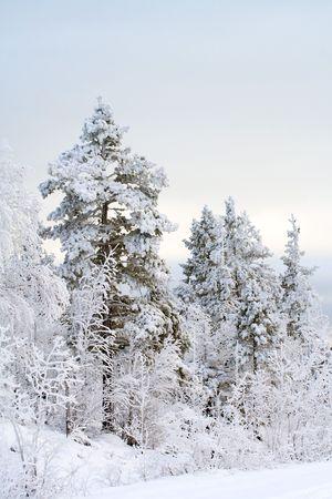 Winter landscape, trees under snow after snow ûåùêü Stock Photo