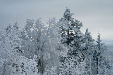 Winter landscape, trees under snow after snow-storm, mountains photo