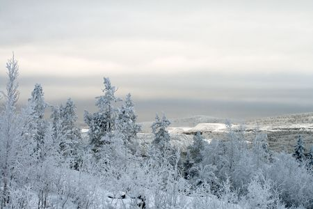 Polar Winter landscape, trees under snow after snow-storm, mountains, evening Stock Photo
