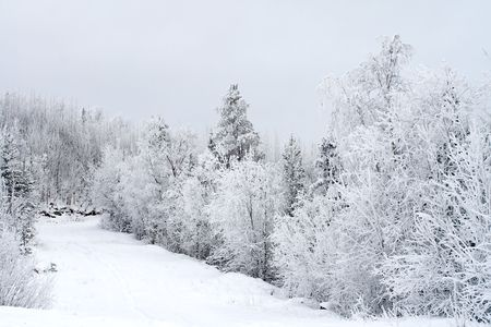 Winter landscape, trees under snow after snow-storm Stock Photo