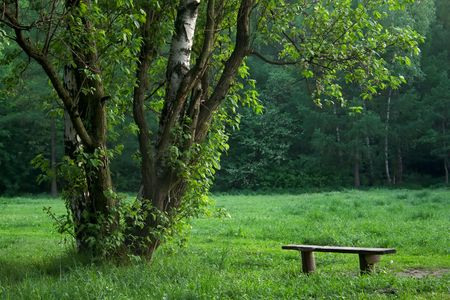Lonely bench in morning park