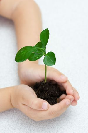 Small green plant in children's palms Stock Photo - 1896361