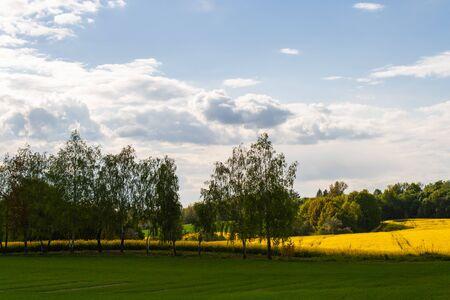 Beau champ de colza jaune et d'arbres verts. Prairie avec une forêt Culture de cultures agricoles. Paysage ensoleillé de printemps avec ciel bleu. Fond d'écran de la nature
