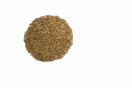 Grains of wheat, barley, rye, oat on white background close up, natural dry grain in the form of a smooth circle on the left side, wheat grains, isolated, top view. Free space for text