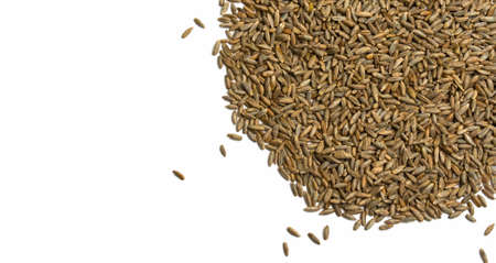 Grains of wheat, barley, rye, oats on white background close-up. Natural dry grain in form of semicircle with scattered seeds on right side isolated top view. Free space for text. Banner for web site Foto de archivo