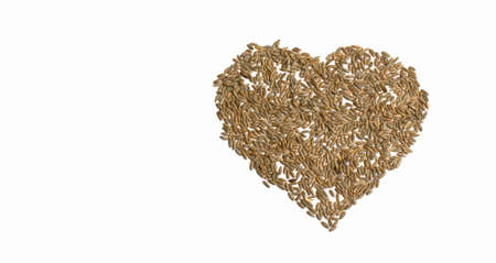 Grains of wheat barley rye oat on white background, natural dry grain in form of big heart in right grains isolated top view. Free space for text Concept photo love of nature Banner for web site