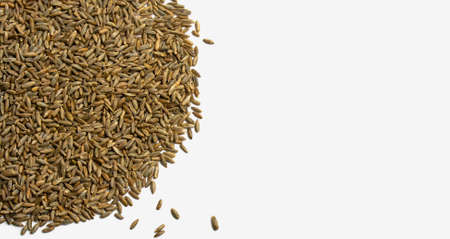 Grains of wheat, barley, rye, oats on white background close-up. Natural dry grain in form of semicircle with scattered seeds on left side isolated top view. Free space for text. Banner for web site