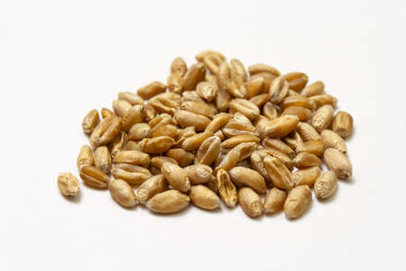 Wheat grains on a white background. Heap of cereal grains isolated closeup. Seeds of barley, wheat, oats, rye, triticale macro shooting. Natural dry grain in the center of the image