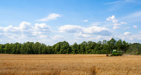 Green combine harvester harvests ripe wheat in field against of trees and sky with clouds. Procurement of cereal seeds by reaping machine for flour production. View from side afar Banner for web site