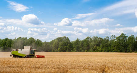 Combine harvester harvests ripe wheat in field, against of trees and beauty blue sky with clouds. Procurement of cereal seeds by reaping machine for flour production. Side view. Banner for web site 免版税图像