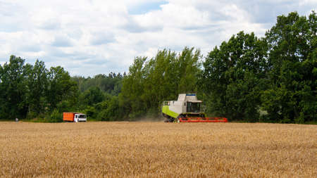 Combine harvester harvests ripe wheat in field against of trees and sky. Truck is waiting for unloading of grain from combine Procurement of cereal seeds with special equipment for production flour