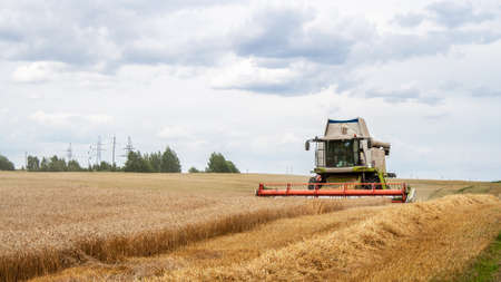Combine harvester harvests ripe wheat in field, against  backdrop of trees and blue sky with clouds. Collecting seeds of cereals with special equipment on farm. Harvester cutting spikelets for flour