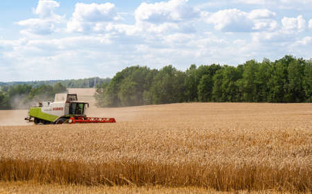 Priluki, Belarus - August 03, 2020 -  field, from . Combine harvester harvests ripe wheat in field, against of trees and blue sky with clouds background.  View from side afar
