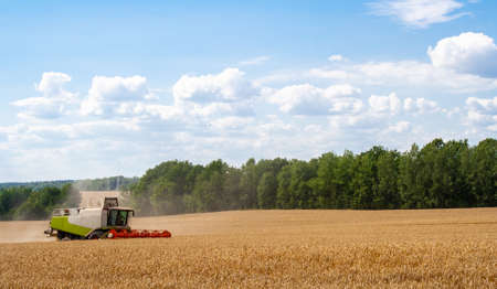 Combine harvester in distance harvests ripe wheat, rye in field, against of trees and blue sky with clouds. Procurement of cereal seeds by reaping machine for production of flour. Side view Banner